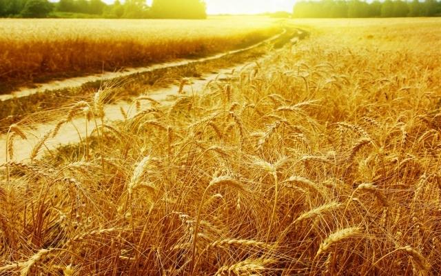Экспертный прогноз: Первую партию крымского зерна на бирже раскупят до конца недели