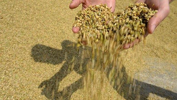 На крымских биржевых торгах планируют продать до 60 тысяч тонн зерна