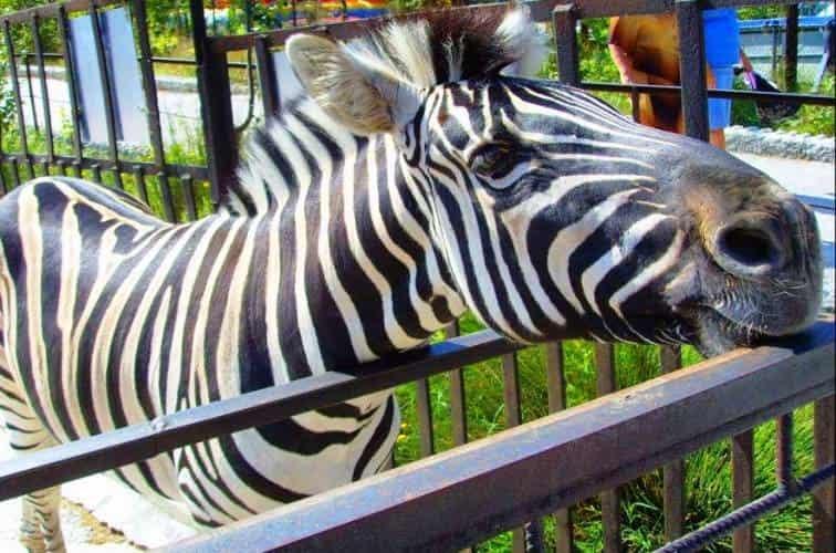 Ялтинский зоопарк «Сказка» закрыли на три месяца