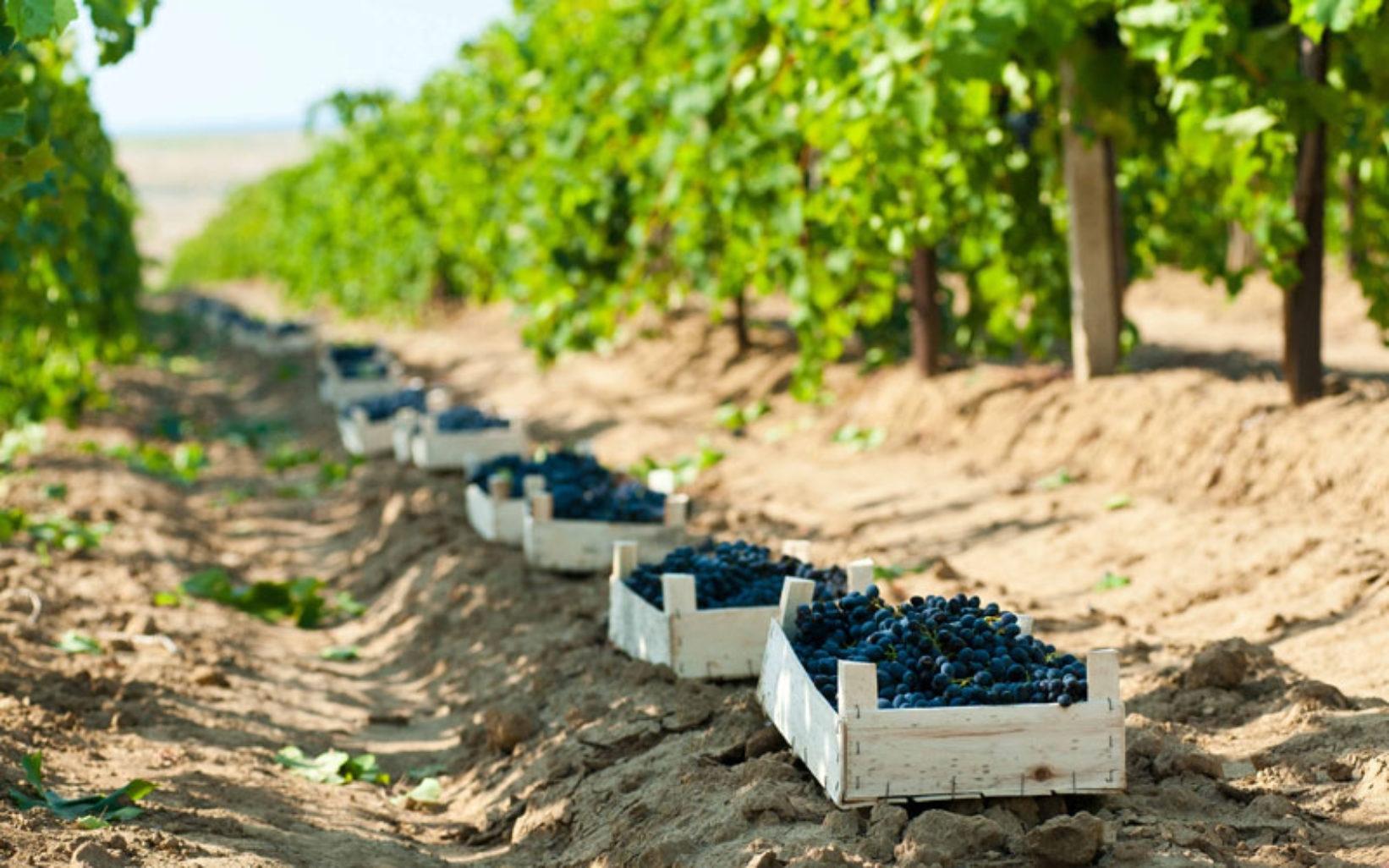 Севастопольское вино отправится на выставку в Италию