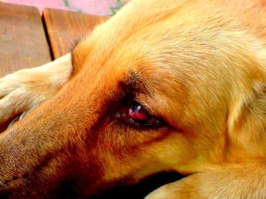 Трое крымчан до смерти избили собаку: заведено уголовное дело