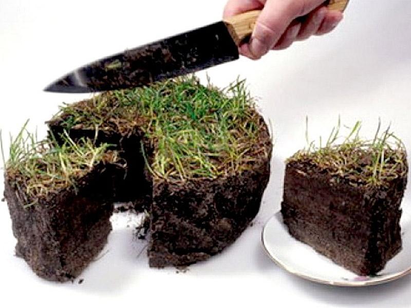 Отобрать землю и пропиариться: бизнес-ноу-хау от Николаева