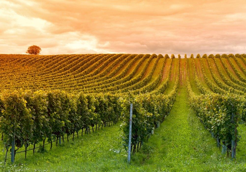 Земли Севастополя «разорвут» под элитные винодельни?