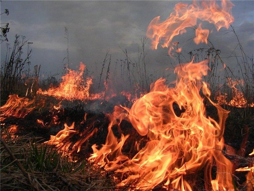 По всему Севастополю горит сухая трава