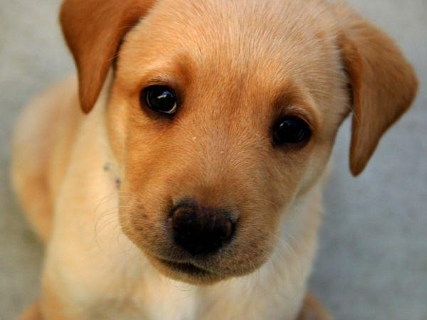 В Севастополе на глазах у детей расчленили собаку