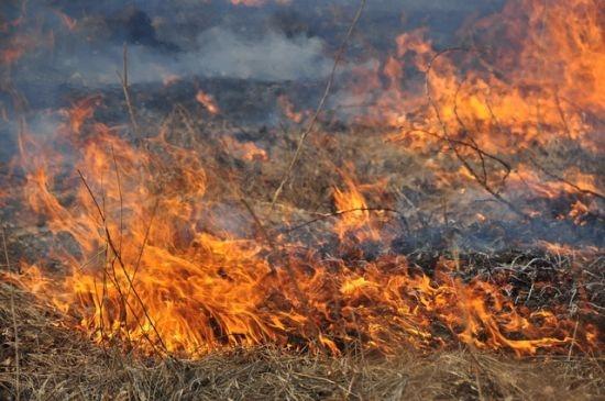 В Севастополе за неделю сгорело почти 200 тысяч квадратных метров травы и мусора