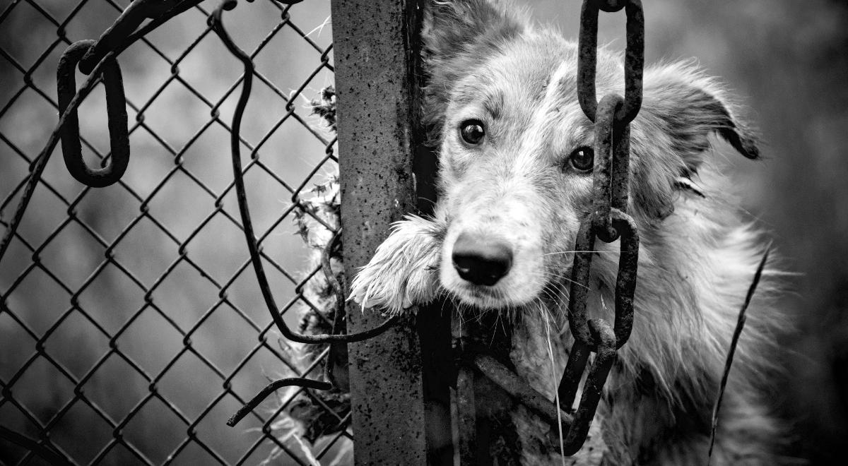 Севастополец на глазах у детей убил собаку лопатой