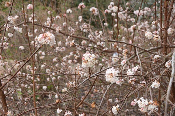 Крымские студенты смогут бесплатно посетить Никитский ботанический сад