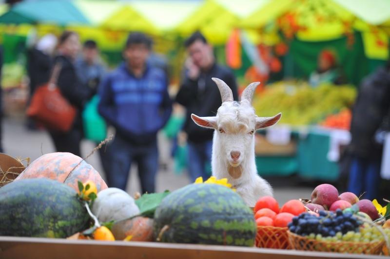 В феврале в Севастополе откроются три фермерские ярмарки — адреса