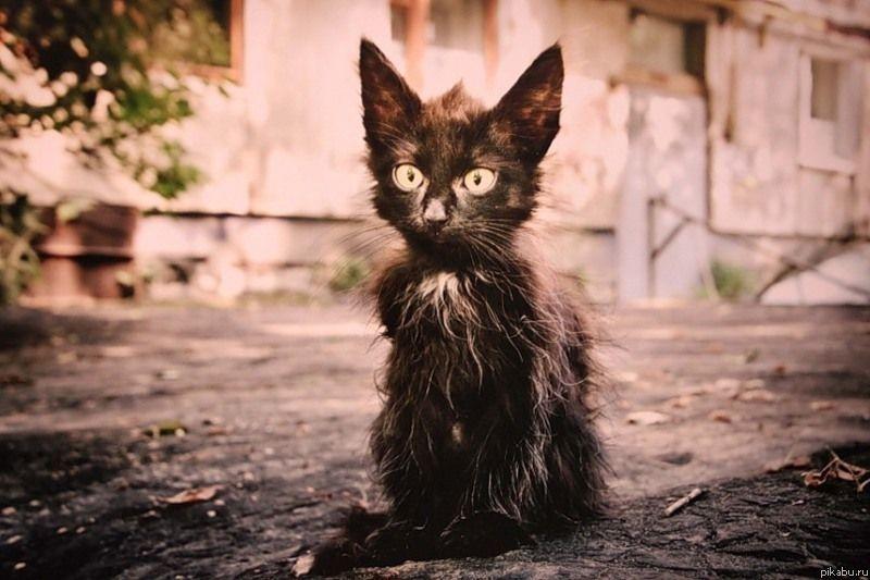 Бездомный кот спас пропавшего российского школьника от холода
