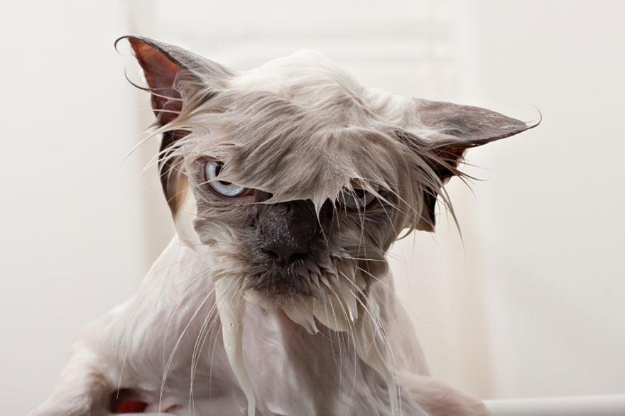 В Краснодарском крае мужчина помыл свою машину котом