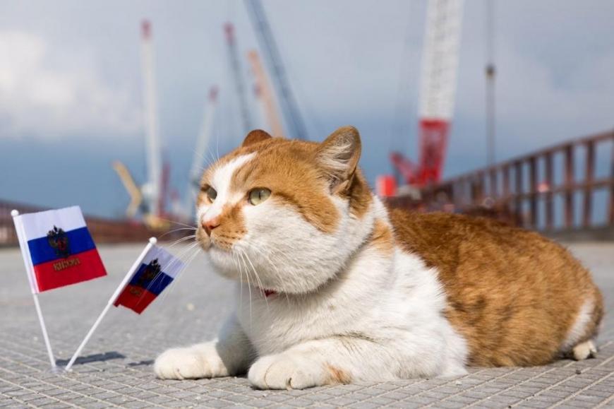 Крымский кот Мостик стал одним из самых популярных котов России