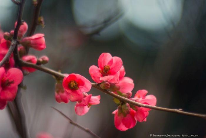 Вереск, нарциссы, бугенвиллии: что сейчас цветет в Никитском ботаническом саду