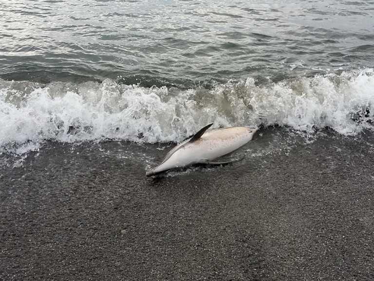 На пляже в Севастополе гниет голова дельфина