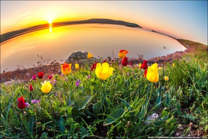 В Крыму тепло и ветрено (прогноз погоды 26 апреля)
