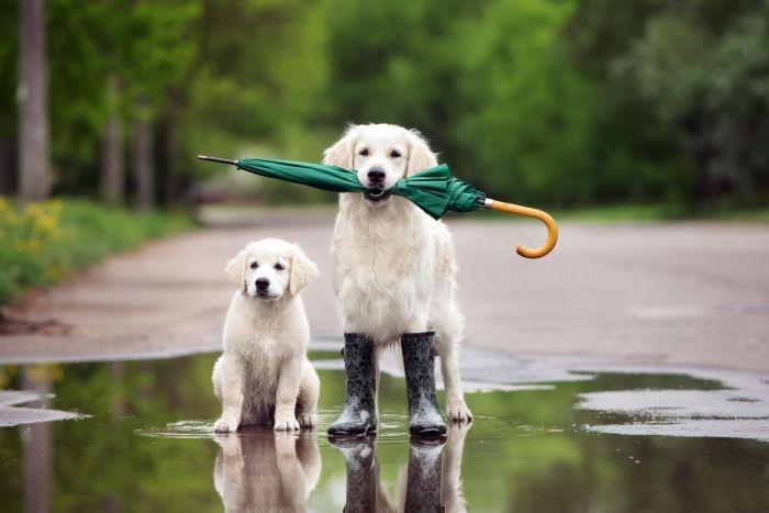 На выходных в Крыму похолодает, местами пройдёт дождь (прогноз погоды на 12 мая)