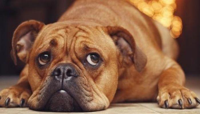 За убийство собаки на глазах у детей севастопольца ждет уголовное наказание