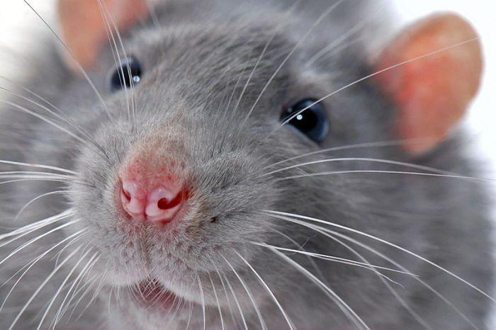 Крыса оставила часть Ялты без света