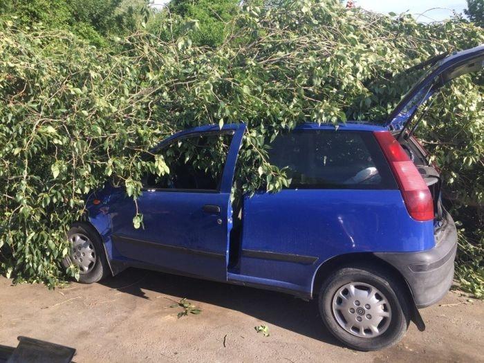 В Севастополе ураганный ветер валит деревья