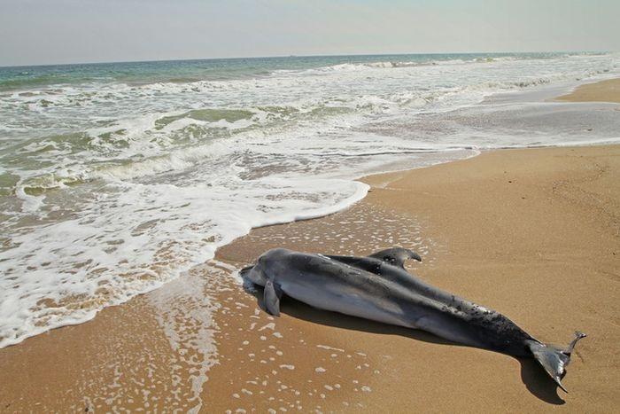 Крымский рыбак заплатит штраф за мертвого дельфина