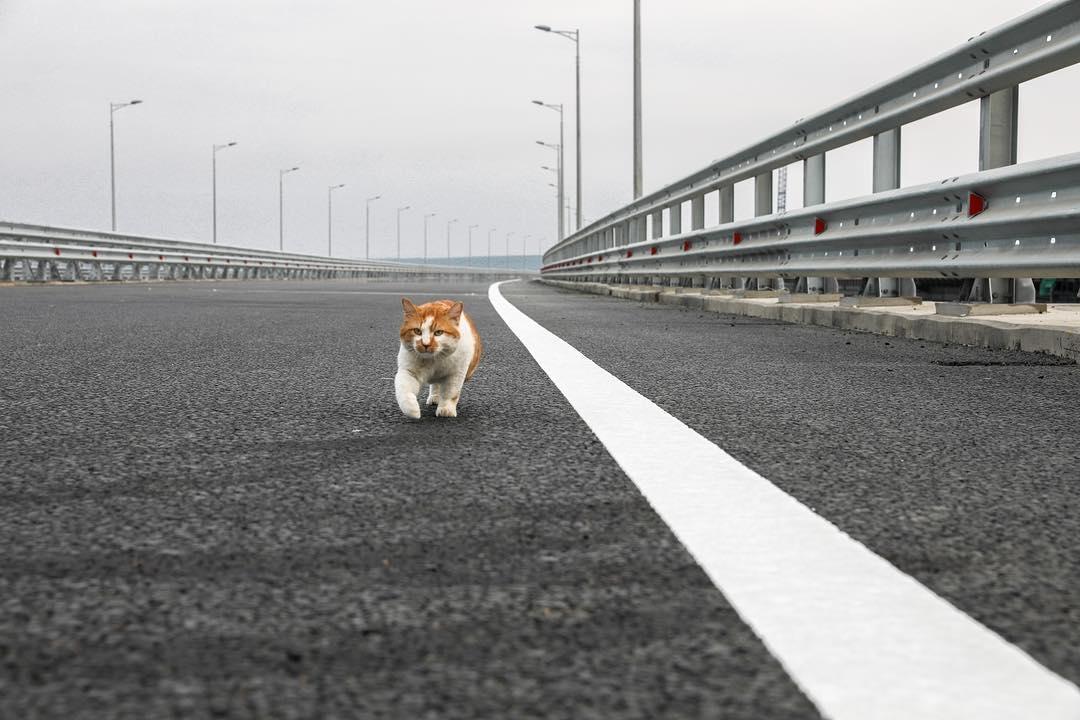 «Пробегает километры лишь четверка мягких лап»: кот Мостик принял Крымский мост