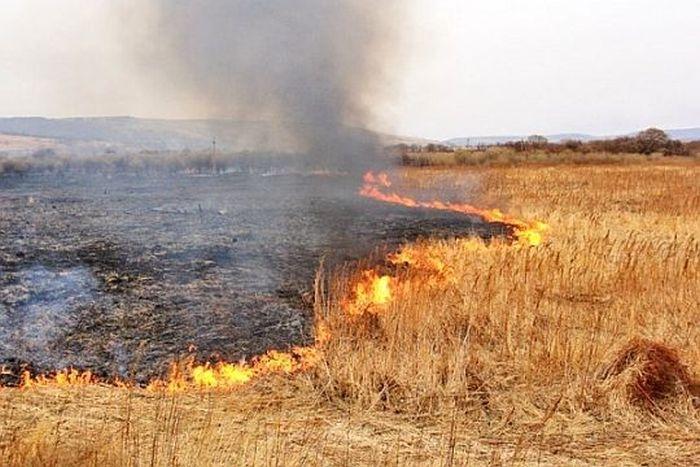 На востоке Крыма выгорело тридцать гектаров сухой травы