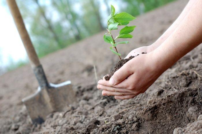 Севастополь озеленят на 50 млн рублей