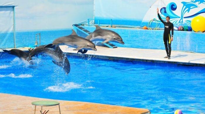 «Дельфинов отдать»: измученных животных Севастопольского дельфинария вернут владельцам