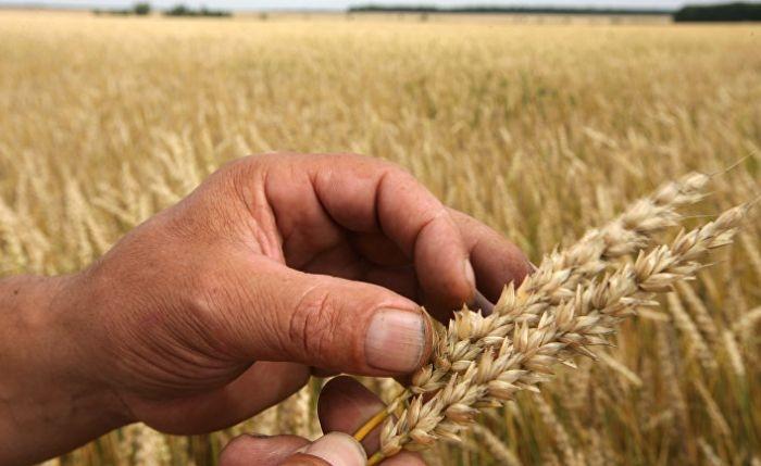 В четырех районах Крыма введен режим ЧС из-за засухи