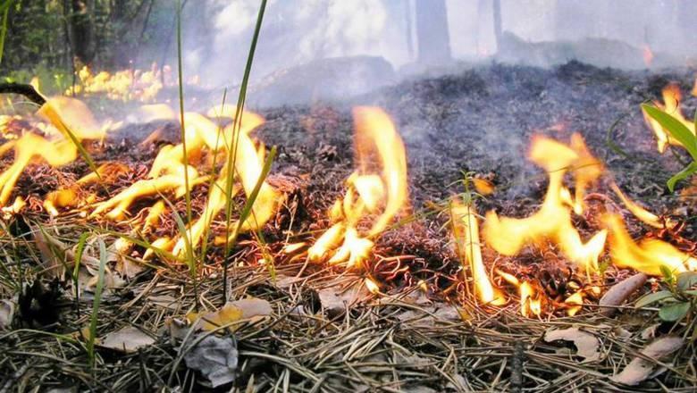 МЧС объявило экстренное предупреждение о высокой пожароопасности на востоке Крыма до 17 июля