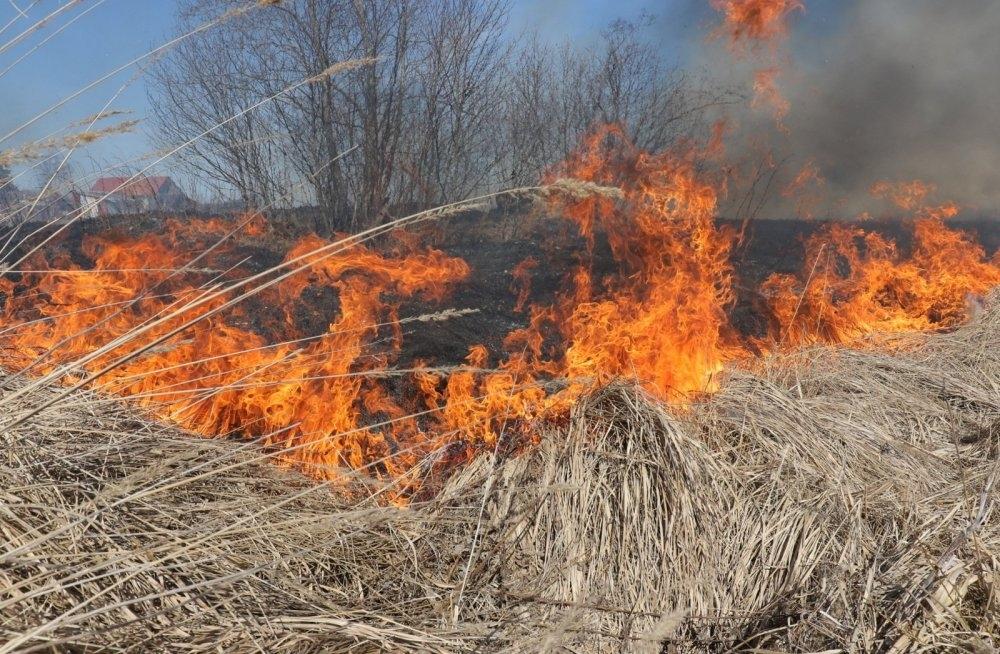 В Севастополе выгорело три гектара травы в Немецкой балке