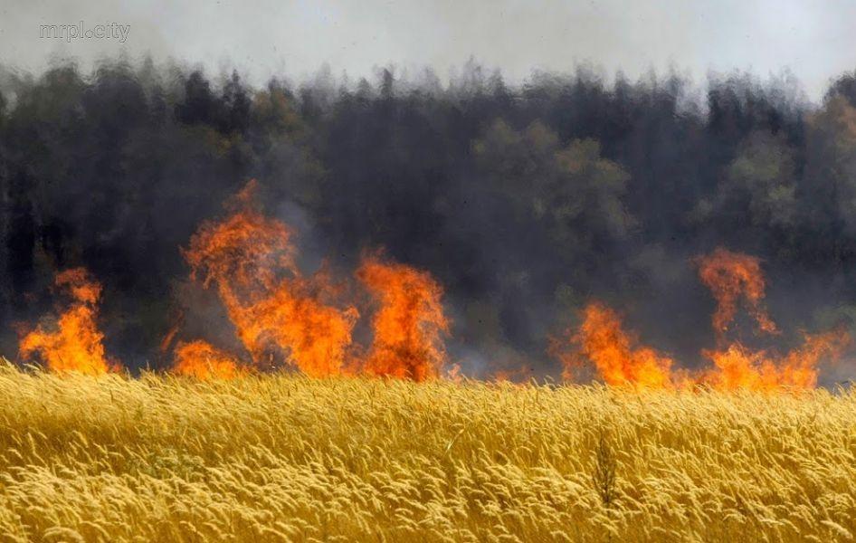 Из-за обстрела украинских силовиков в ДНР выгорело 120 га пшеницы