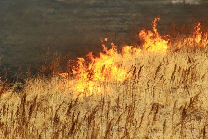 Чрезвычайная пожарная опасность сохранится в Крыму до конца недели