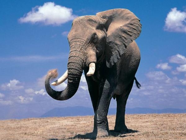 По центру Севастополя прогулялся индийский слон
