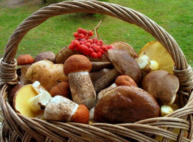 Не кормить детей, сортировать по видам: Роспотребнадзор напомнил правила сбора грибов