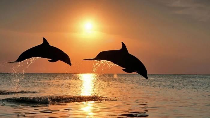 Побег годовалого ребёнка из дома, купание Киркорова с алуштинскими дельфинами, ДТП на трассе из-за ветра: итоги 20 августа