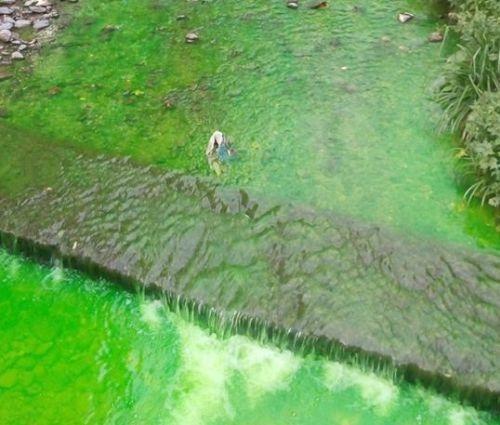 Ярко-зеленый цвет воде в реке Ялты мог придать обычный краситель