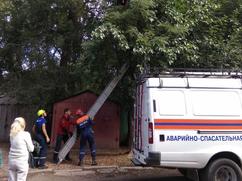 В Симферополе пришлось спасать мужчину, который пытался снять котёнка с дерева
