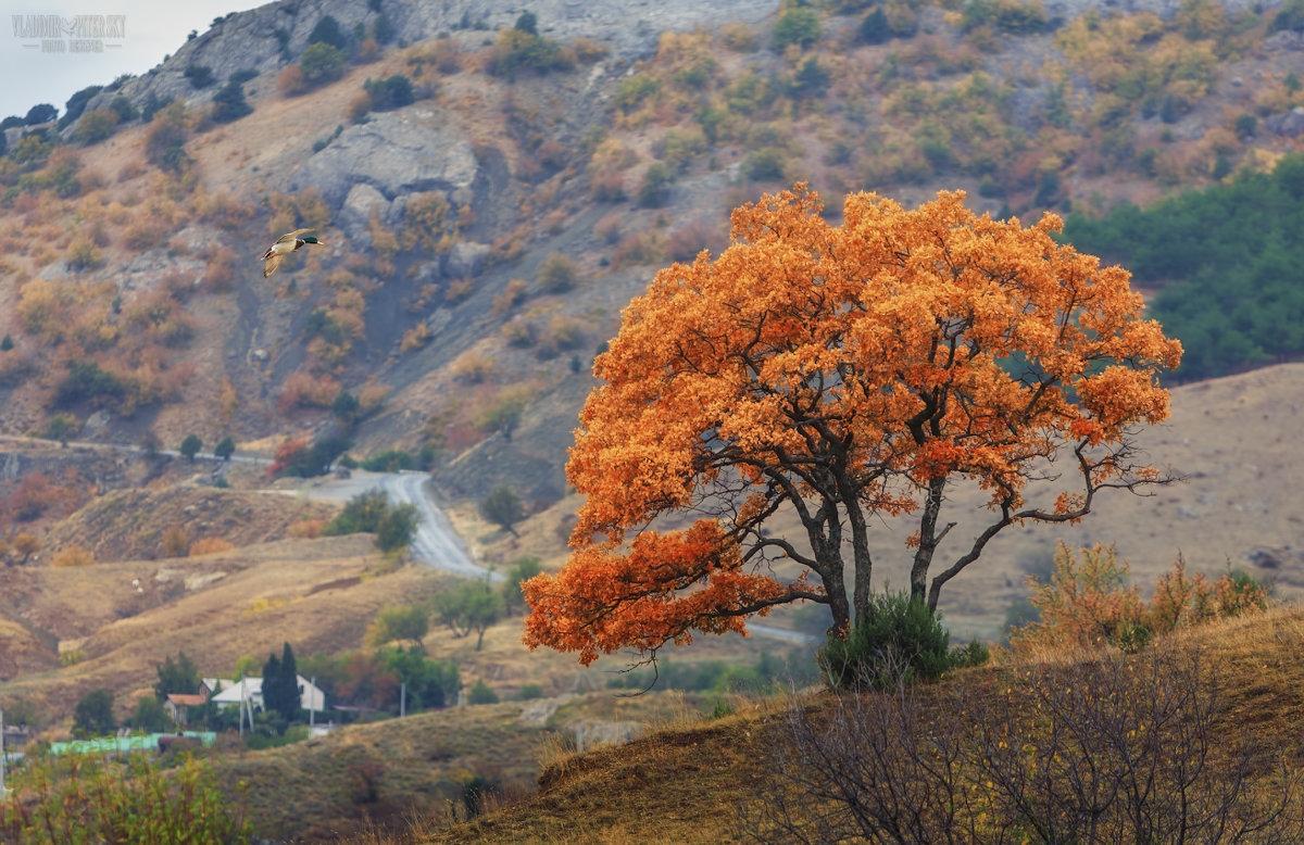 Крым под действием антициклона: какую погоду стоит ожидать сегодня