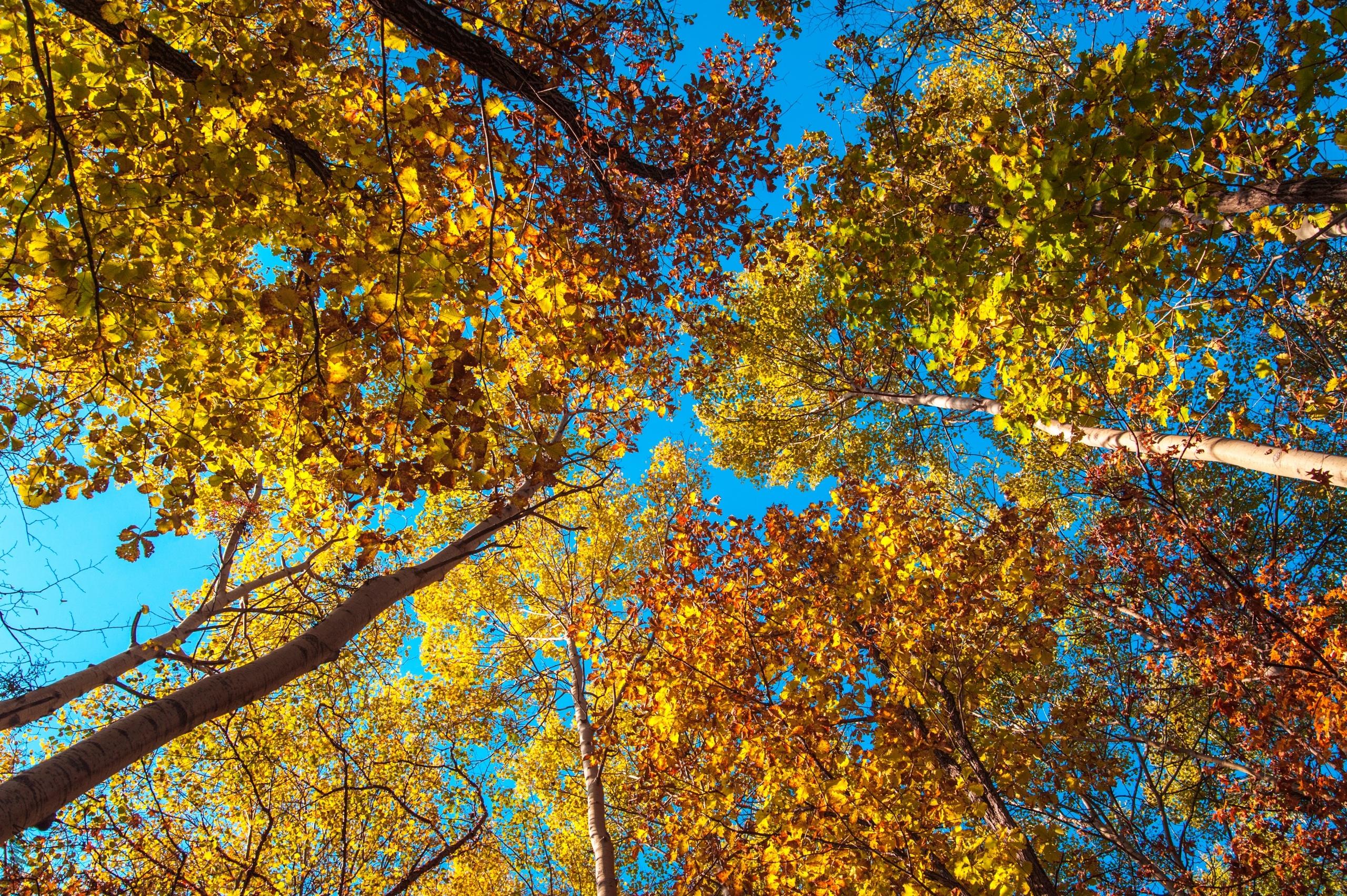 Жаркий октябрь: какая погода ждет сегодня крымчан и севастопольцев (прогноз на 17 октября)