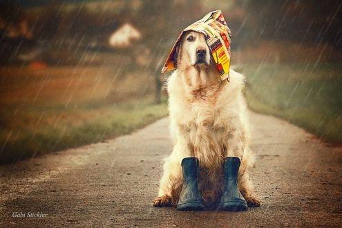 Синоптики обещают дожди, сильный ветер и до +22° (прогноз погоды на 3 октября)