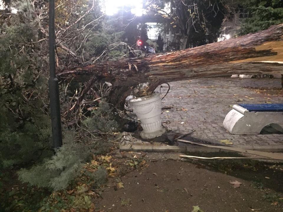 Бескомпромиссная стихия: непогода в Крыму крушит автомобили, валит деревья и сносит все на своем пути
