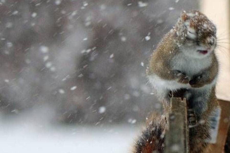 Выходные в Крыму будут снежными и ветреными (прогноз погоды на 1 декабря)