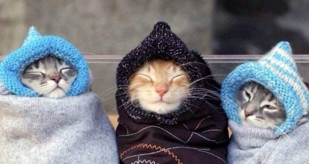 В Крыму сохранится холодная погода (прогноз на 13 ноября)