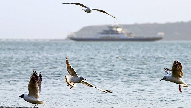 Между Крымом и Абхазией запустят паромы и катера