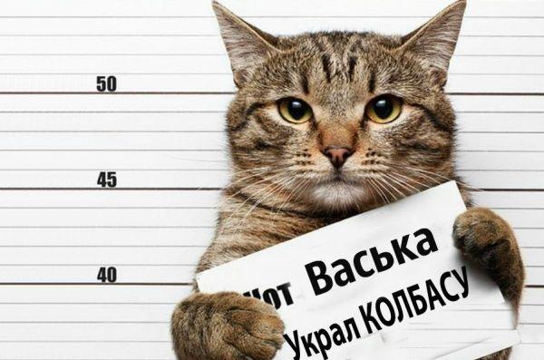 Контрабанда, кража и потоп в магазине: сводка кошачьего криминала за 2018 год