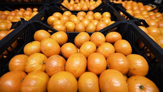В Крыму в турецких мандаринах и гранатах нашли вредоносных личинок