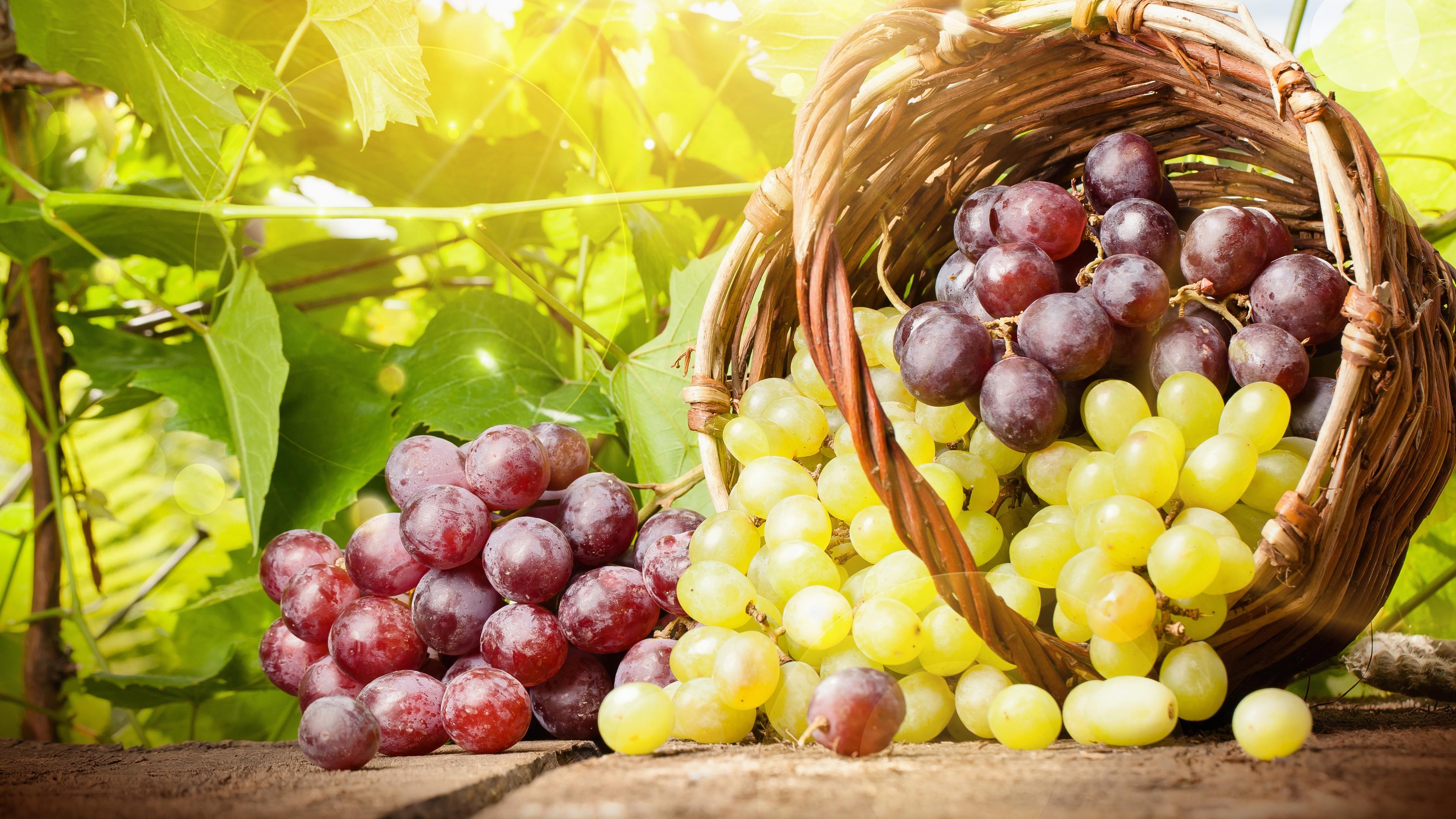 Готовы бунтовать: недобросовестная компания-винодел задолжала аграриям 50 млн рублей