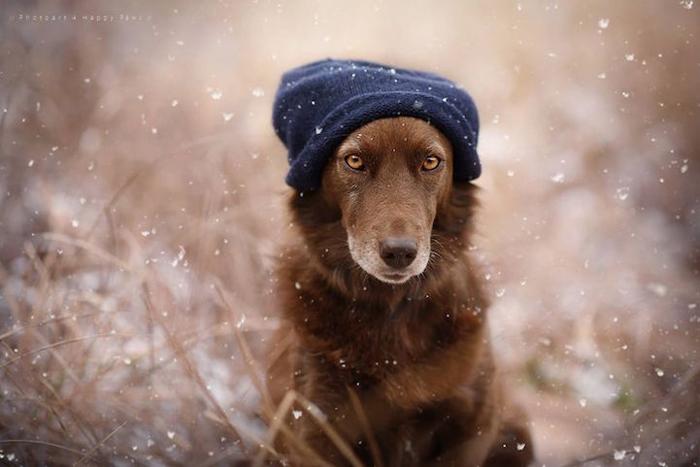 Неделя в Крыму закончится потеплением (прогноз погоды на 7 декабря)
