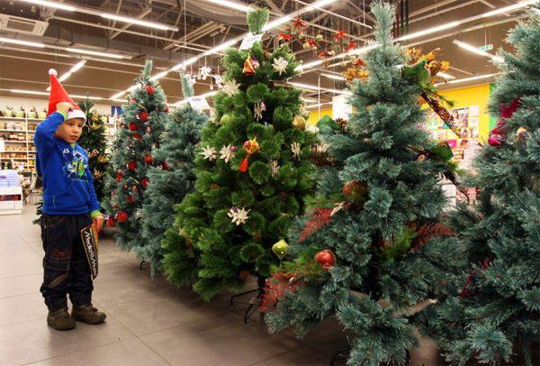 Как выбрать новогоднюю ель — советы экспертов
